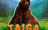 Taiga Novomatic – популярный игровой автомат для счастливчиков